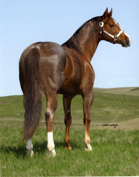 PC Leatherwood ~ Red Roan Stallion of Five Arrow Quarter Horses, Mobridge SD.